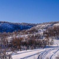 зимний лес :: Алёна Колесова