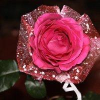 Для меня нет тебя прекрасней... :: Tatiana Markova