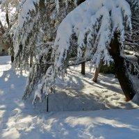 Снегом украны :: Наталья Джикидзе (Берёзина)