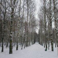 Зимние аллеи :: Алёна Савина