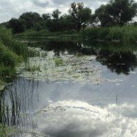 Река Битюг :: Ольга Кривых