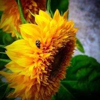 Желтая на желтом :: Мария Корнилова