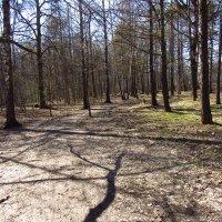 IMG_3541 - Апрельские тени не спутаешь с осенними! :: Андрей Лукьянов