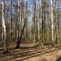 IMG_3576 - Апрельские тени надо лишь подождать! :: Андрей Лукьянов