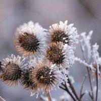 Зимние цветы :: Ната Волга