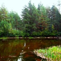Лесной прудик :: Андрей Снегерёв
