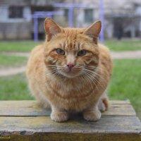 бездомный кот :: Zinaida Belaniuk