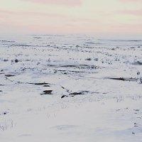 Прогулки под северным небом :: Михаил Лобов (drakonmick)