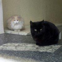 Кошки :: Алексей Мартынов