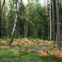 Осенний лес :: Андрей Снегерёв