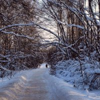 Подмосковная зима :: анна нестерова