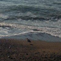 Любопытная чайка :: Difoxy *