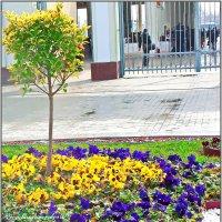 Весеннее настроение в ...феврале!!! :: Юрий Владимирович