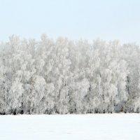 Оттенки белого :: Татьяна Лютаева