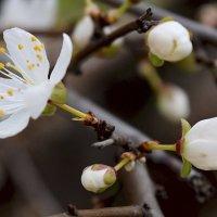 Приближение весны... :: Zinaida Belaniuk