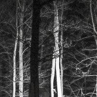 Ночной лес :: Людмила Синицына