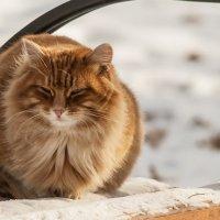 yellow Cat :: Dmitry Ozersky