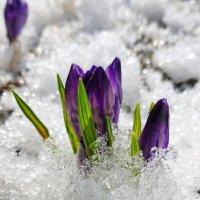 зима с весной встречались. :: Светлана