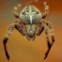 spider :: Александр Хохлов
