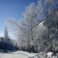 Белая берёза под моим окном :: Татьяна