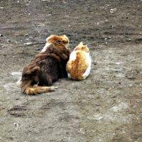 кот и собака :: Татьяна Королёва