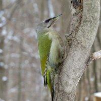 Зеленая красавица :: Ната Волга