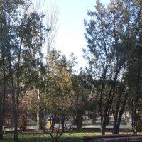 Февраль в парке...5 :: Тамара (st.tamara)