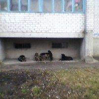 Жители дома №17 :: Миша Любчик
