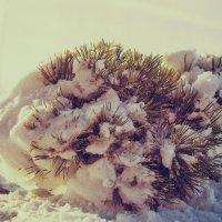 Ежик в снегу :: Valerii Ivanov