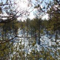 2. Вид с высокого дерева. Автор Саша. :: Фотогруппа Весна.