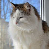 Весной запахло, и мой кот это почувствовал. ))) :: Ирина Никифорова