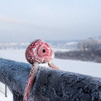 Холодно. Скоро весна? :: Евгения Каравашкина
