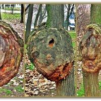 три стороны одного дерева :: Александр Корчемный