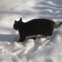 Ну и снега навалило... по колено... :: Михаил Попов