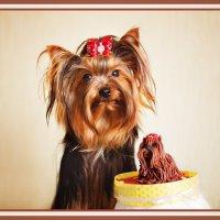 Сью - первый день рождения. :: Ольга Колодкина
