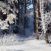 Приглашение в зимний лес :: Виктор Ковчин