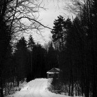 Домик в лесу... :: Марина Велигура