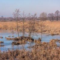 Бывшее озеро :: Игорь Вишняков