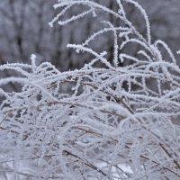 Winter :: Татьяна Кретова