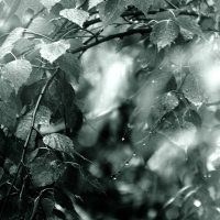 весенние  дожди... :: Валерия  Полещикова