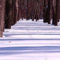 Снежные параллели :: Татьяна Ломтева