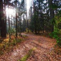 В солнечном лесу. :: Антонина Гугаева