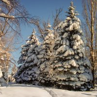 после снегопада :: Андрей ЕВСЕЕВ