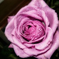 Цветочное настроение :: Марина Назарова