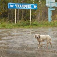 Дождливый день :: Евгений Суханов