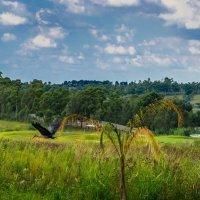 Африка :: Ирина Краснобрижая