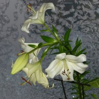 мороз и цветы :: tgtyjdrf