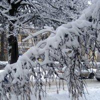 Наклонилась от снега :: Елена Семигина
