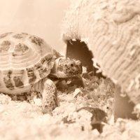 Наш черепах :: Яна Лемешко
