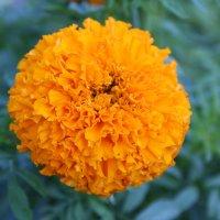 Оранжевый Шар :: Damir Si